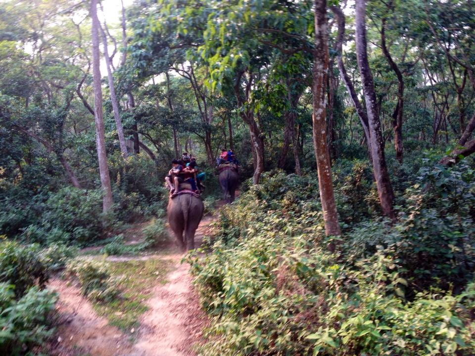Riding elephants in Chitwan, Nepal