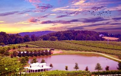 The Best Wine Regions To Visit In America