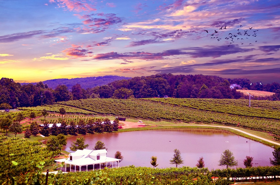 The Best Wine Regions To Visit In America